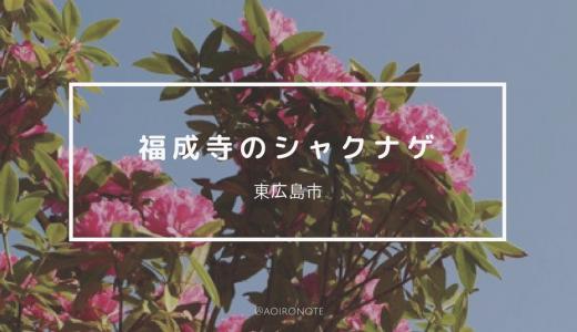 【東広島】福成寺でシャクナゲが見頃。色とりどりの花を楽しもう!