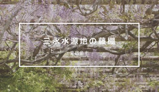 【東広島】フジの花が咲き誇る三永水源地へ。長い藤棚が圧巻!